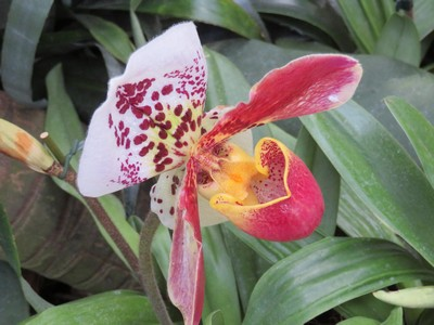 blog 2018 apr11 Erasmus 642 Mainau orchid